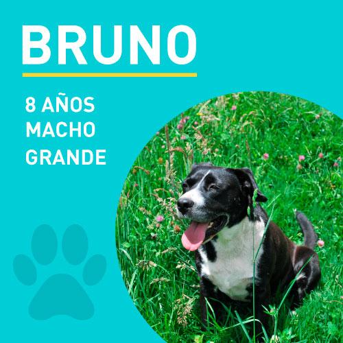 BRUNO_NEW