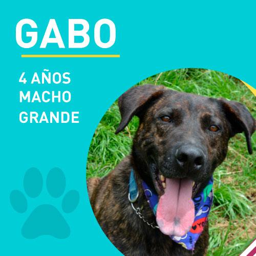 GABO_NEW