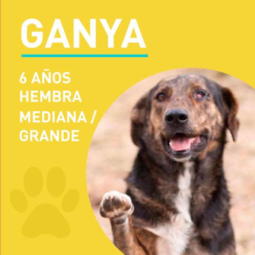 GANYA_NEW