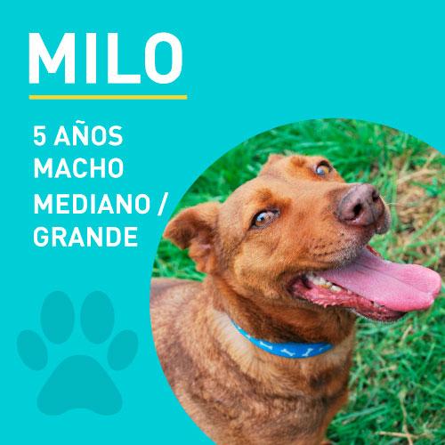 MILO_NEW