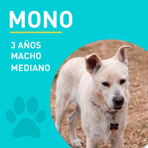 MONO_NEW