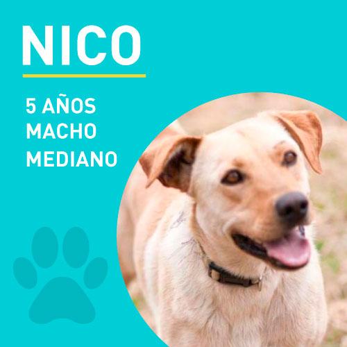 NICO_NEW