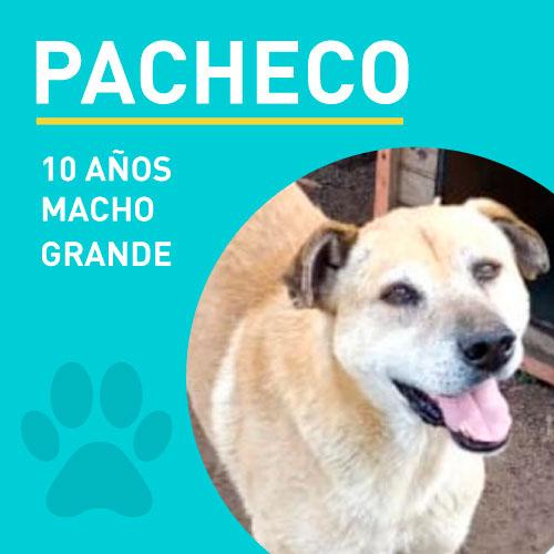 PACHECO_NEW