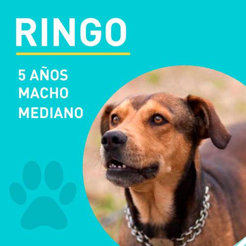 RINGO_NEW