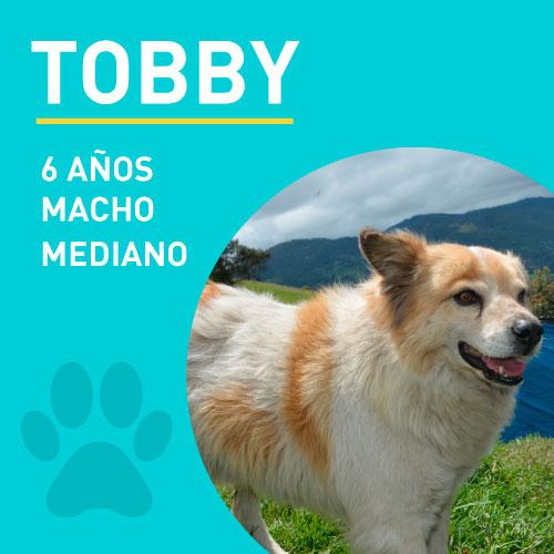 TOBBY2_NEW