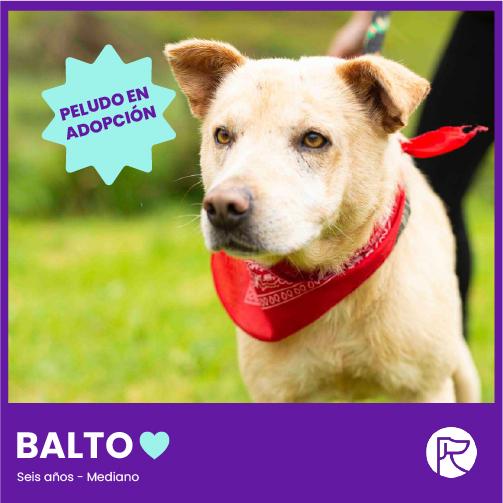 BALTO-100