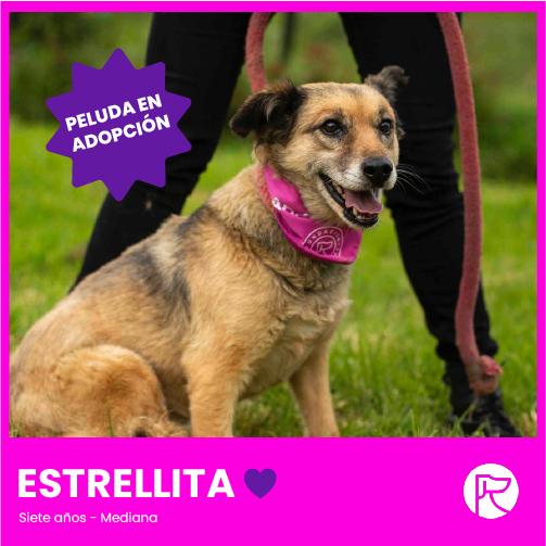ESTRELLITA-100