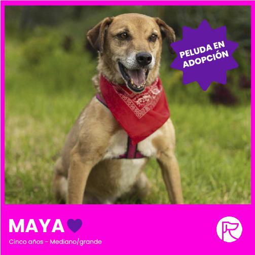 MAYA-100