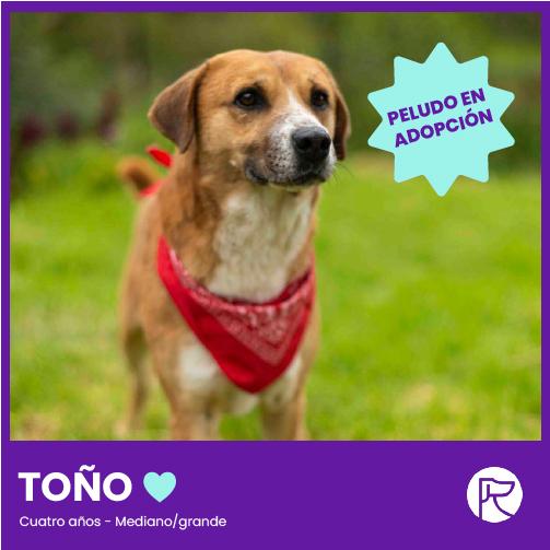 TONIO-100